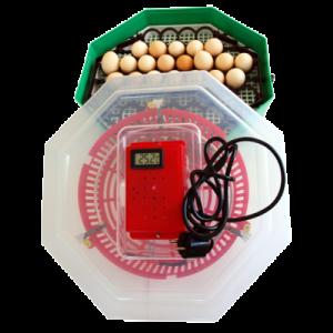 Incubator electric 5DT cu dispozitiv de intoarcere oua si termometru